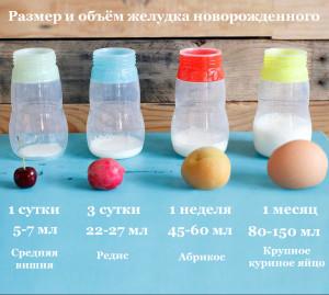 желудок -ру2