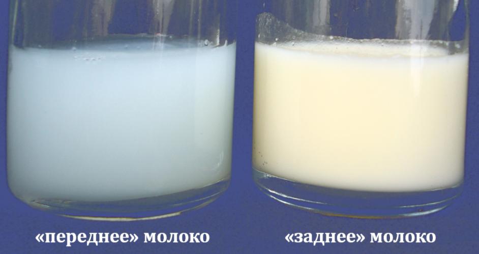 переднее-заднее молоко 4