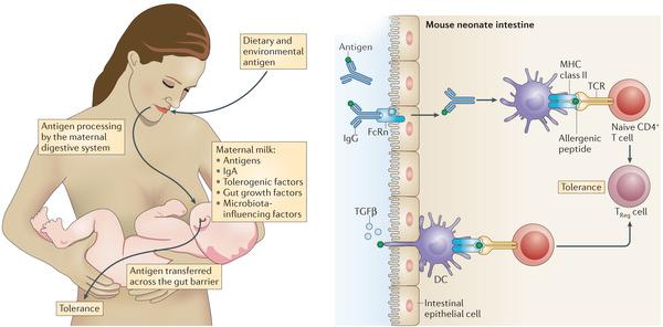 иммунизация молоко 4
